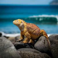 zuid-amerika-galapagos